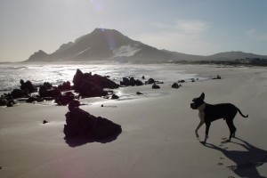 Boris on Beach 54vSmall